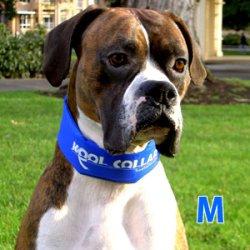 画像1: KOOL COLLAR クールカラー(M) ブルー