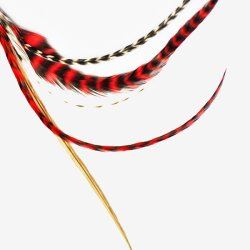 画像1: Pet Plume Originalシリーズ Red