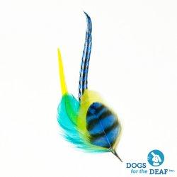 画像1: Pet Plume Fusionシリーズ Macaw