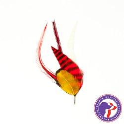 画像1: Pet Plume Fusionシリーズ Salsa
